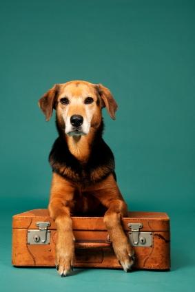 voyager avec chient